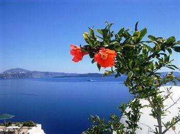 flowers on the top of ifestio villas - Villa Agis, ifestio villas Oia Santorini - Oia - rentals
