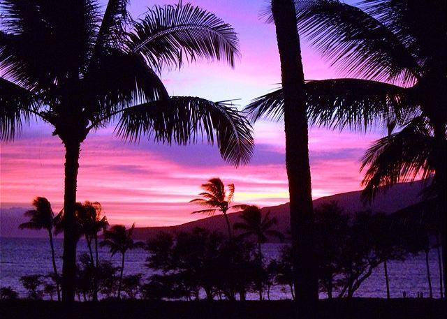 Luana Kai #D101 - Luana Kai D101 Direct Oceanfront Ocean View 1/1 Great Rates! - Kihei - rentals