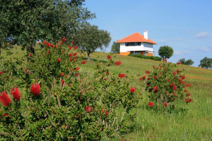 Casa a Oliveira - Casa a Oliveira - Alentejo - rentals