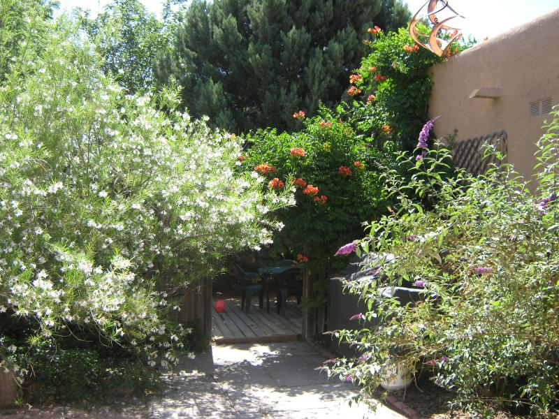 EAST PATIO IN BLOOM - - CASITA DE PAZ - Albuquerque - rentals