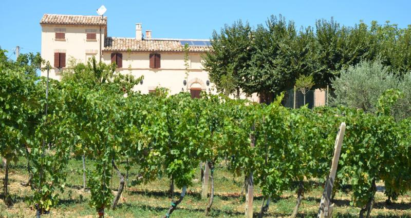 The farm holidays - Farm holidays Alla Vecchia Cascina - Corinaldo - rentals