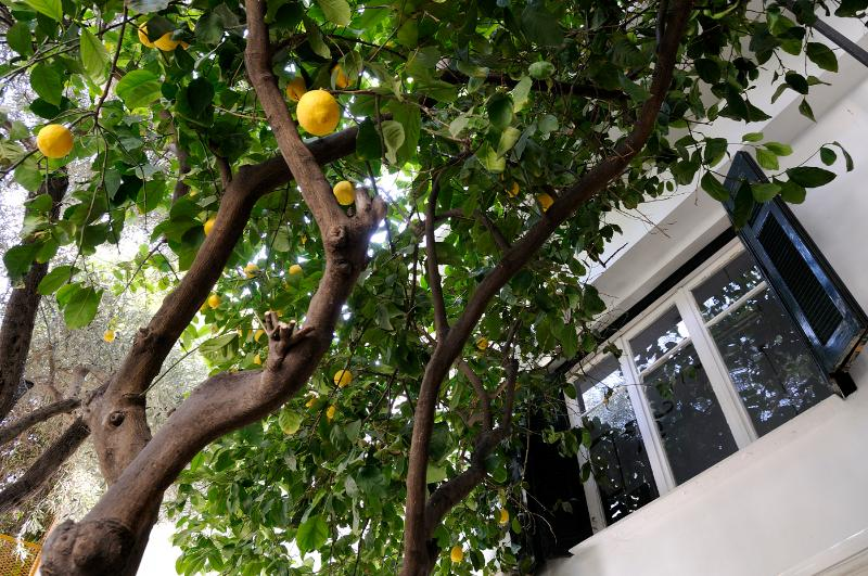 Athens Green Apartment with garden Pagrati Mets! - Image 1 - Athens - rentals