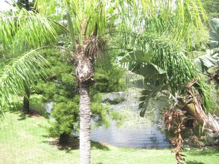 View - Gulfside Large Garden Unit M - Siesta Key - rentals