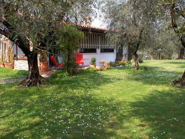 Giardino - appartamento tra gli olivi del Garda 2/7  pax + ca - Moniga del Garda - rentals