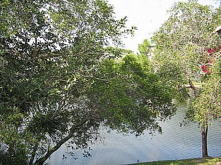 View - Wild Pines - Bonita Bay E-203 - Bonita Springs - rentals