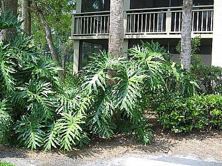 Front of Building - Wild Pines - Bonita Bay D-101 - Bonita Springs - rentals