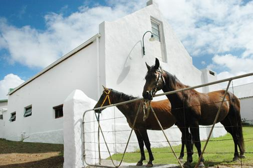 Property entrance - once a horse stabel - Converted horse stable - self catering cottage - B - Bredasdorp - rentals