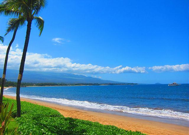 Sugar Beach Resort - Sugar Beach Oceanfront Ocean View Penthouse 2/2 Great Rates! - Kihei - rentals