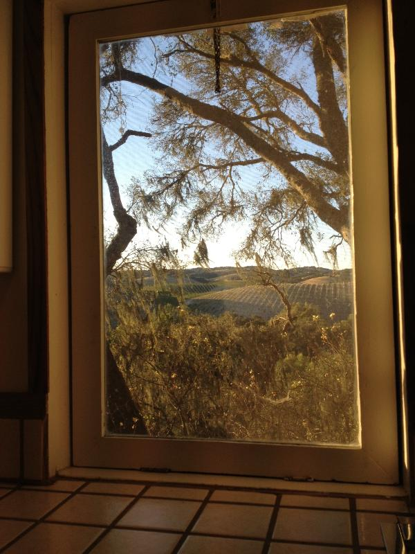 view from kitchen window - Cottage tucked away in the vineyards - Templeton - rentals