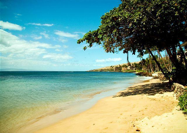 Kanai A Nalu #311  Direct Oceanfront with GREAT Oceanviews 2/2 Sleeps 4. - Image 1 - Wailuku - rentals