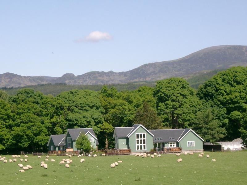 Exterior view of Highland Heather Lodge - Highland Heather Lodge - Comrie - rentals