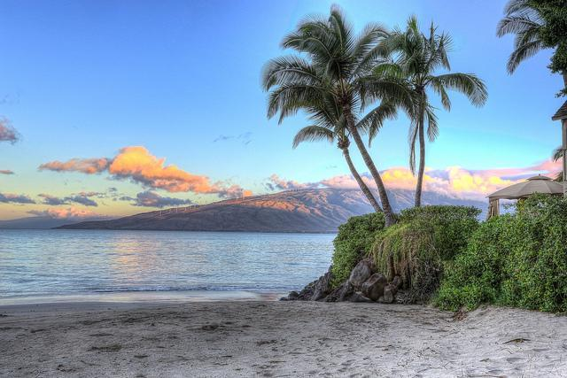 Kalepolepo Beach Park is less than 300 footsteps from your front door!  Rated 4.5 out of 5 Stars!!!! - TRACY'S TROPICAL TREASURE #2: CORNER PENTHOUSE! - Kihei - rentals