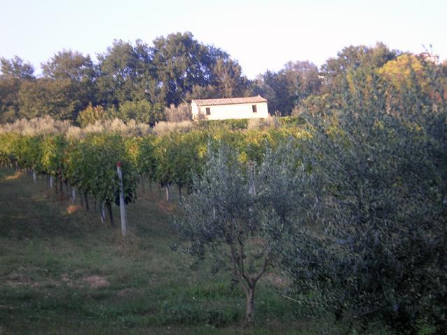 panorama - oasi tra mare e monti - Massignano - rentals