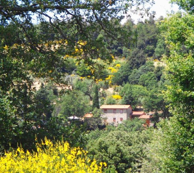 Agriturismo Le Maceie Tuscan Vacation Rental - Image 1 - Castiglion Fiorentino - rentals