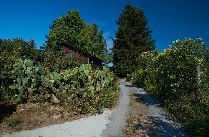 driveway - Sonoma Celtic Cottage - Sebastopol - rentals