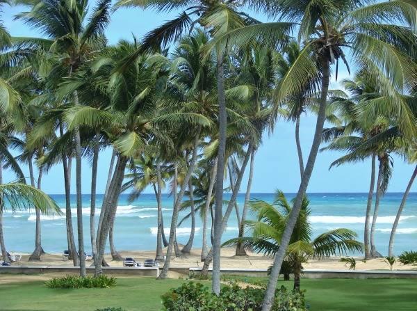 Rustling Palms - Image 1 - Uvero Alto - rentals