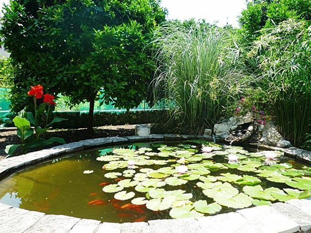 Family House Mozara - Slano - Room 3 - Image 1 - Slano - rentals