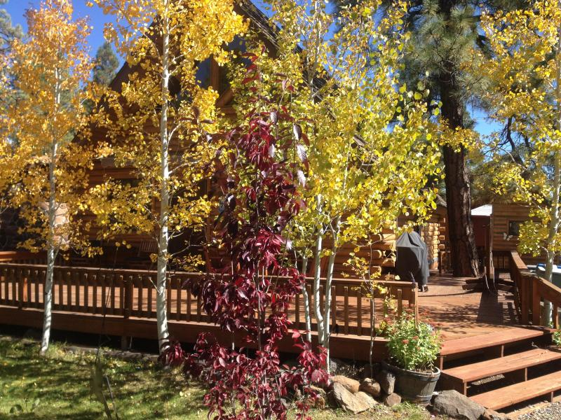 Fall Colors at the Log Cabin - Log Cabin in Munds Park - Munds Park - rentals