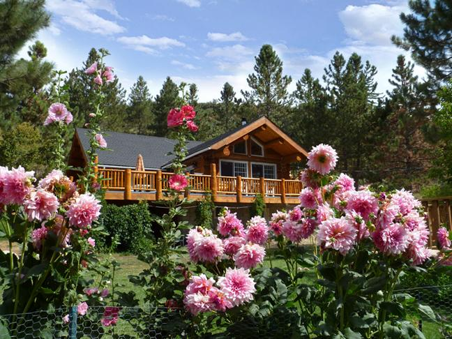 Unique Handcrafted Log Home on 5 acres - Amazing Log Dream Home & River, Family Reunions - Angelus Oaks - rentals