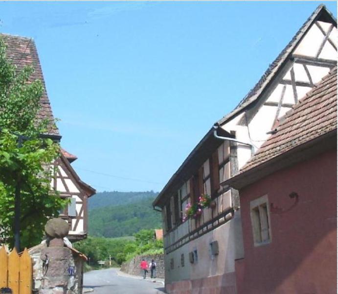 Gite Colmar - Gite Colmar - Niedermorschwihr - rentals