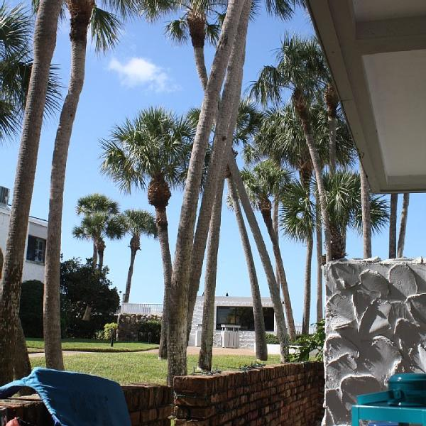 view from our patrio - beach and pool are located where the palm trees end - Ground floor two bedroom/two bath condo - Venice - rentals