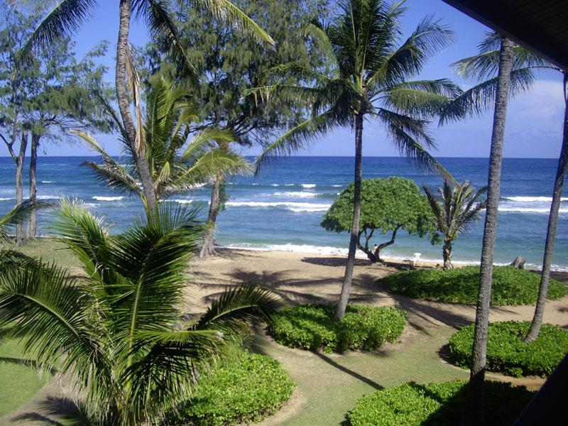 Georgeous Ocean Views - Beautiful Ocean Views and Swaying Palm Trees - Kapaa - rentals