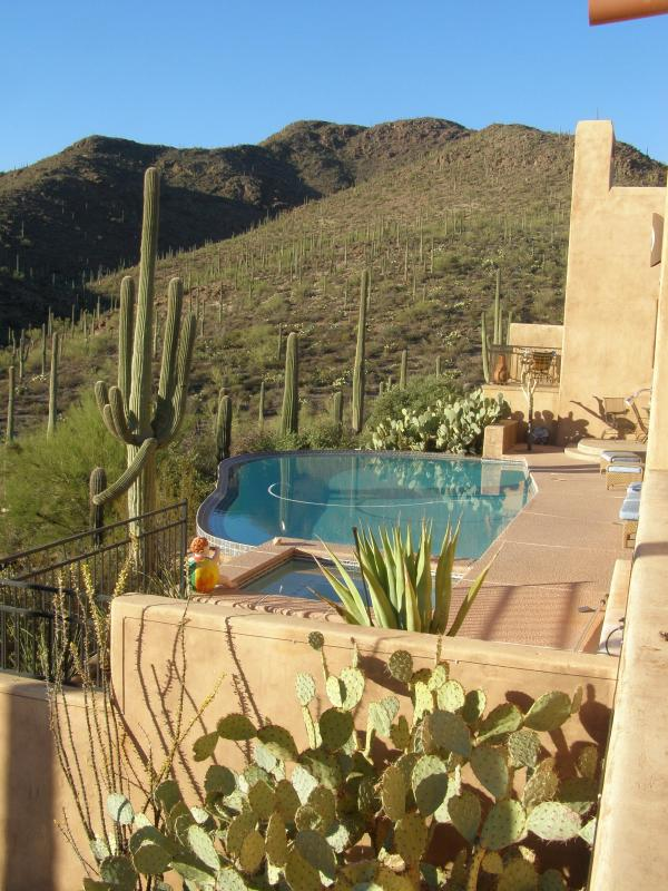 Zero Edge Pool over looking the Sonoran Desert - Tucson Luxury Bed and Breakfast - Cactus Flower - Tucson - rentals