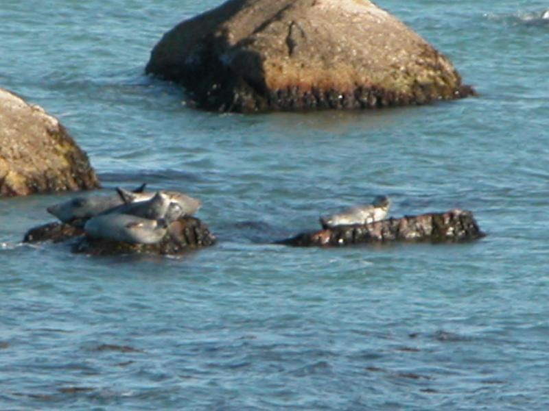 It's Fall!  The seals have come home to rest through the Winter - Plymouth's One of a Kind 'Year-Round' Vacation Retreat - Plymouth - rentals