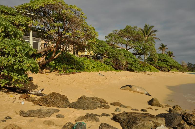 Laie Beach Frequent Visitor - Bessie Kuuipo - Ocean Sun at Tiki Moon Villas - Ocean Front - Laie - rentals