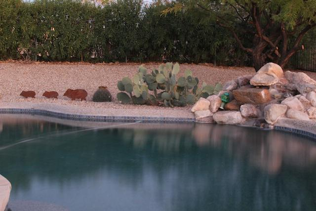 Pool..... - Quite and Cozy Home just waiting for you! - Tucson - rentals
