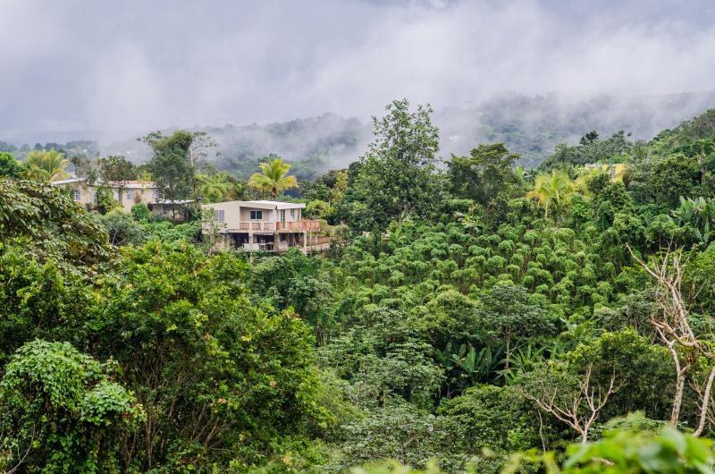 Casa Flor - Mountain Top (1-9) - Image 1 - Utuado - rentals
