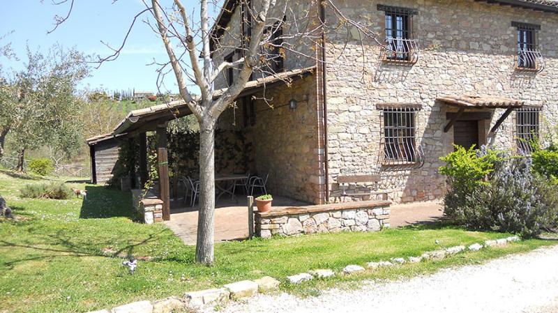 Le Felcete: Ulivi - Image 1 - San Venanzo - rentals