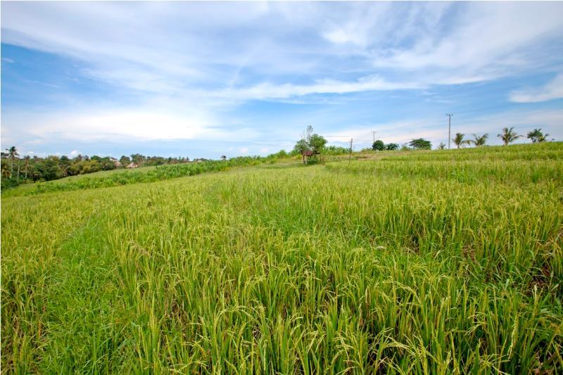 Rice View - Villa Nawang Wulan 4 Bedroom -Berawa-Canggu - Denpasar - rentals