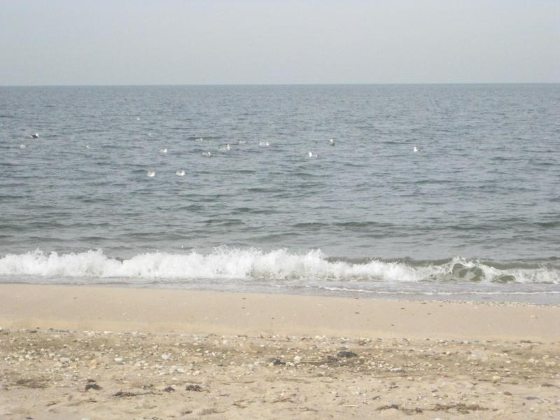 Tranquil local beach - PRISTINE GETAWAY, WITHIN SHORT WALK OF TWO WHITE, SANDY, SOUND BEACHES - Southold - rentals