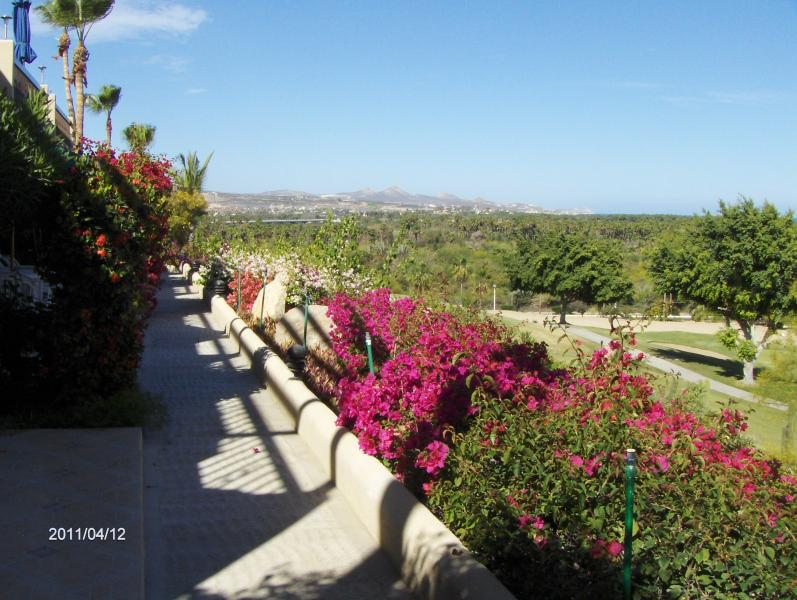 View from terrace - 2 bdr, close to all shops and beach,  great view - San Jose Del Cabo - rentals