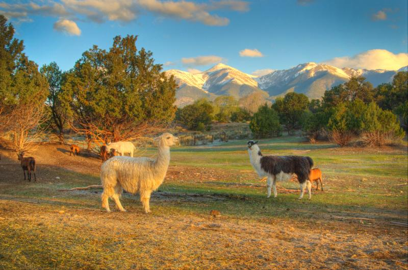Views from the lodge - Mountain Goat Lodge B&B  and Dairy Goat Farm - Salida - rentals