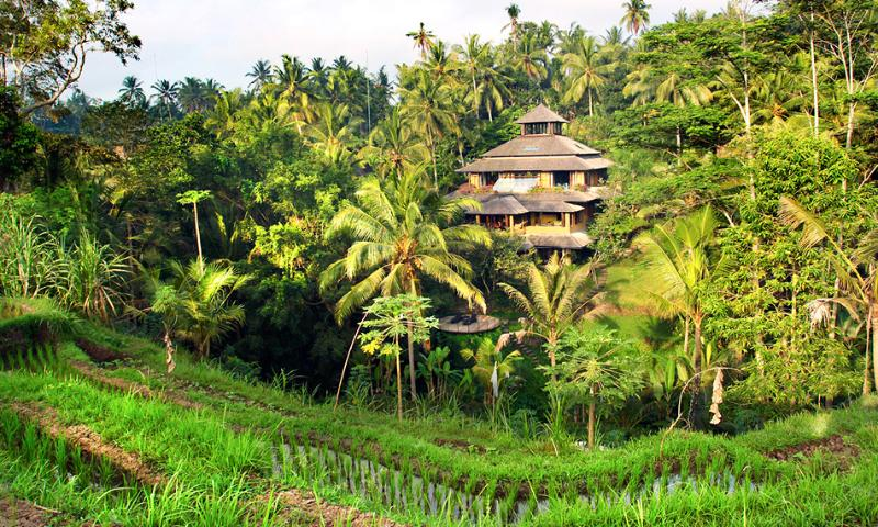 View of Pelangi Estate from across the river. It is hidden in lush tropical forest. - Spectacular riverside Pelangi Estate 7 Bedrooms - Ubud - rentals