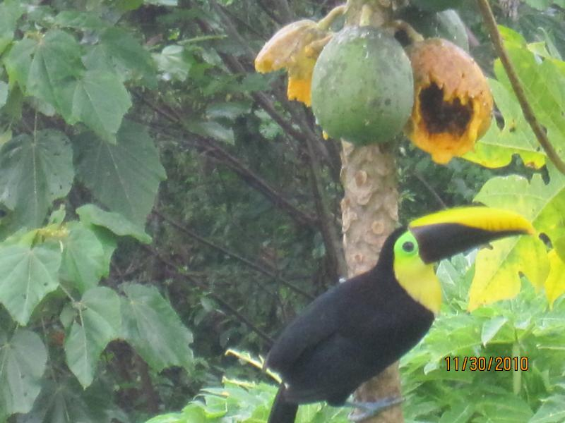 Spectacular Ocean Views from Every Room & Terrace - Lots of Monkeys & Toucans! - Image 1 - Ciudad Colon - rentals