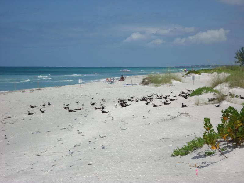 Beachfront right at your door - Las Hermanas/Starfish Beach front Longboat Key #3 - Longboat Key - rentals