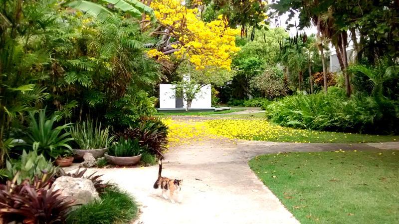 Amazing nature´s colors. Common grounds. - AMPLE GARDEN APT STUDIO NEAR TRAIN IN SAN JUAN - San Juan - rentals