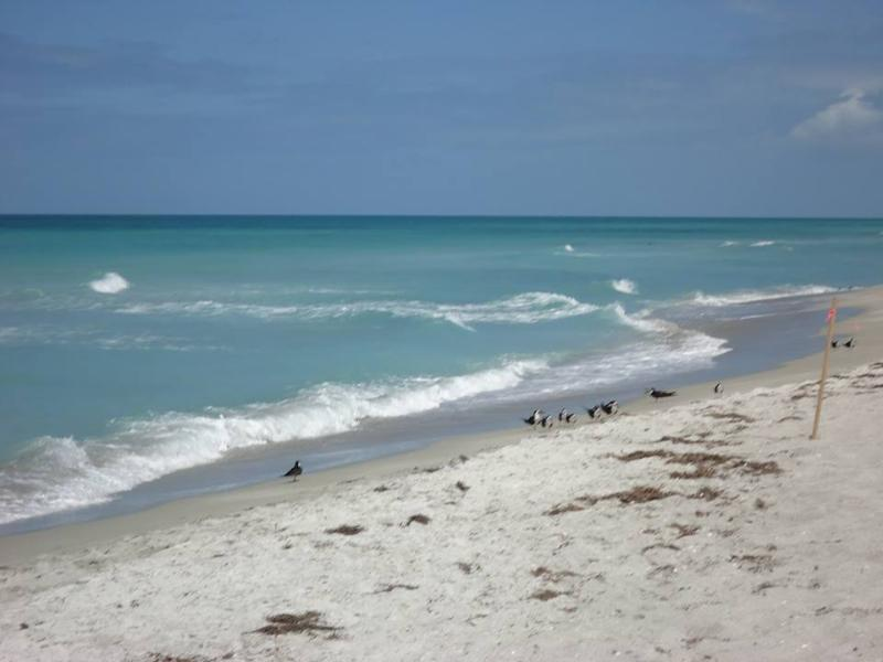 Beachfront! - Las Hermanas/Starfish #2 Beachfront Longboat Key - Longboat Key - rentals