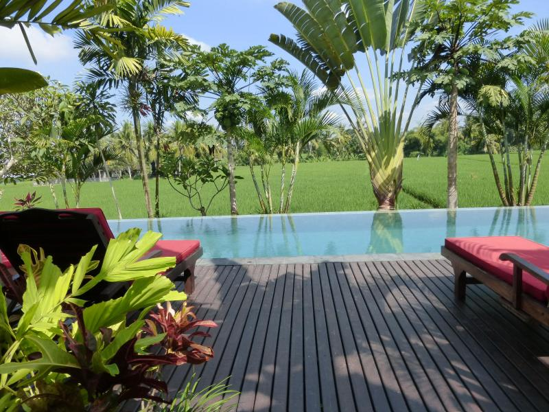 The amazing views from our infinity pool overlooking the rice fields - Bali Harmony-LUXURY Million$Views from ONLY $79! - Ubud - rentals