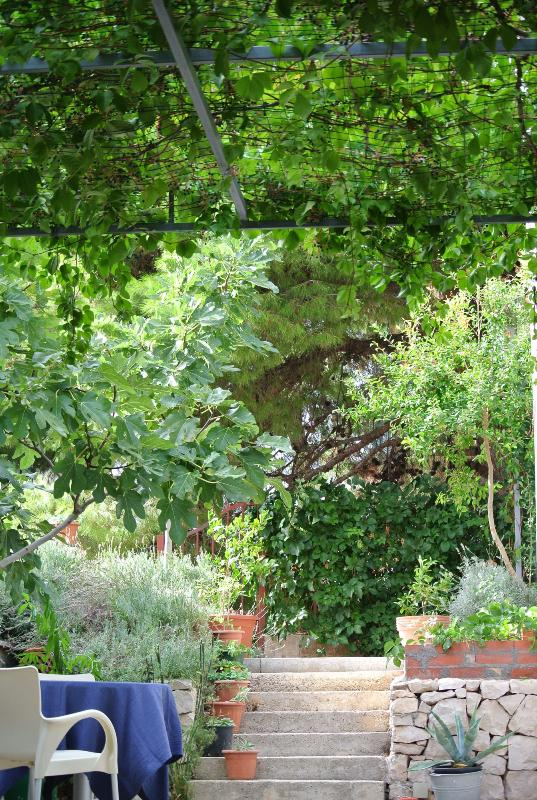 a yard covered with vinegrape leaves - A yard as a living room - Sibenik - rentals
