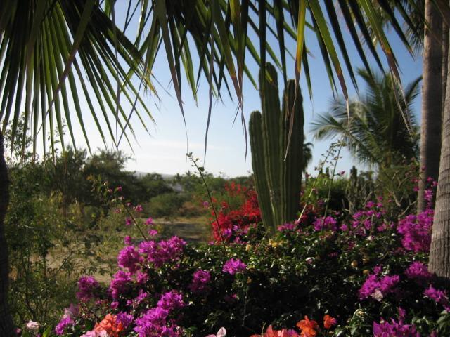 THE COURTYARD NEAR POOL - CABO SAN LUCAS, BCS, MX. ECONO CONDO VACATION - Cabo San Lucas - rentals