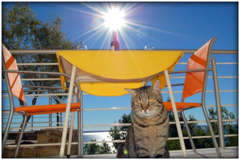 balcony - Ark 4* Panoramic Sea View Suite 1/1, Donkey - Stobrec - rentals