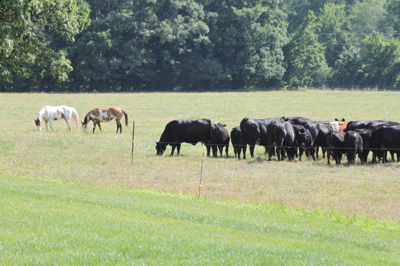 Horses and Cows Graze in the Pasture - This property no longer available here - Summertown - rentals