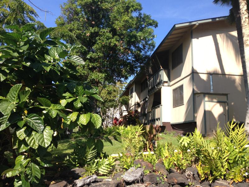 your condo in paradise - 2 bdr fully equipped in paradise - Kailua-Kona - rentals