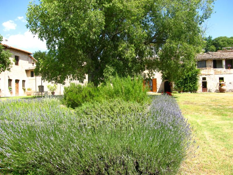 Sensationally beautiful grounds and farmhouse, containing 2 self-catering apartments - Poreta Bio Farm Suite A - Rome/1 hr 15 mins - Lenano - rentals
