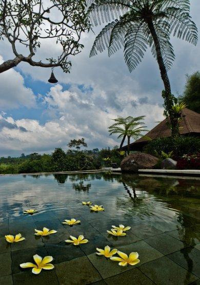 Pool Exotica - Villa Montana - Heavenly Bali - Payangan - rentals
