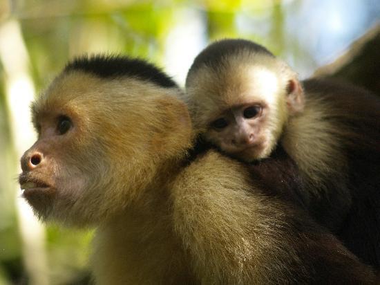 Motherhood - Monkey Hut, Puerto Jimenez, OSA Peninsula - Puerto Jimenez - rentals